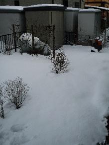2015.1 雪.jpg